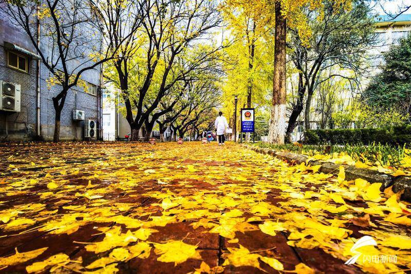 山师校园落叶季,随手一拍就是你喜欢的样子