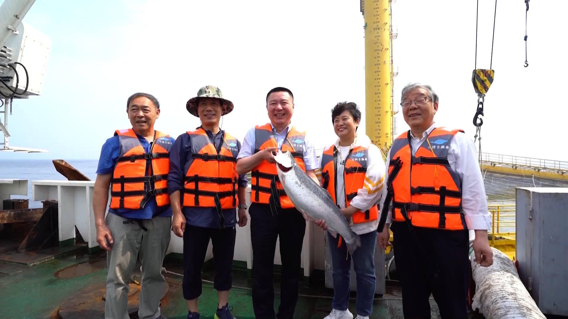 """最快12小时!""""深蓝一号""""让青岛市民在家门口就可以吃到新鲜三文鱼"""