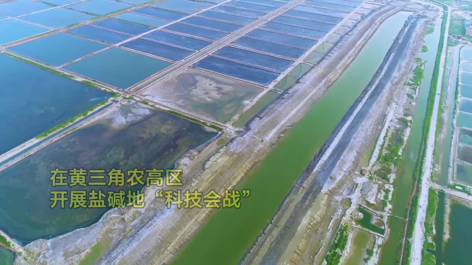 问政山东|黄三角农高区:打造以盐碱地为特色的全国农业创新高地