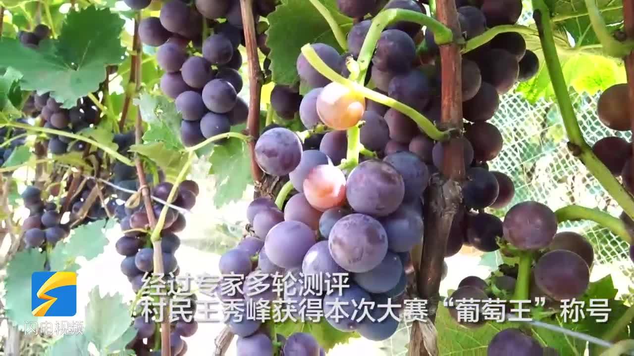 美麗商店、全域旅游 濱州陽信縣商店鎮皮薄肉嫩的葡萄等您來摘