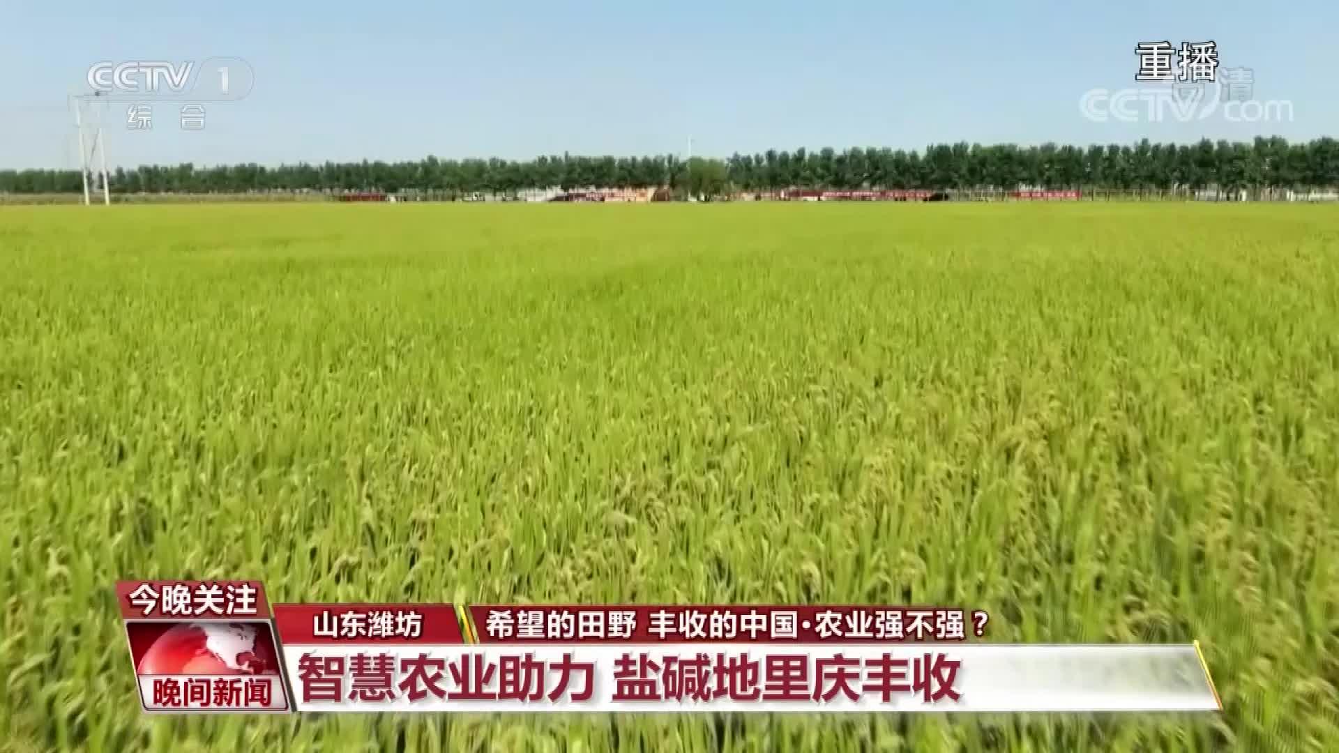 潍坊昌邑丰收盛景登上央视《晚间新闻》