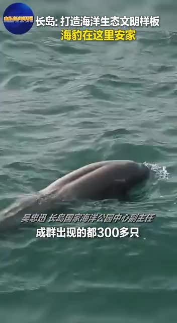 长岛:打造海洋生态文明样板 海豹在这里安家
