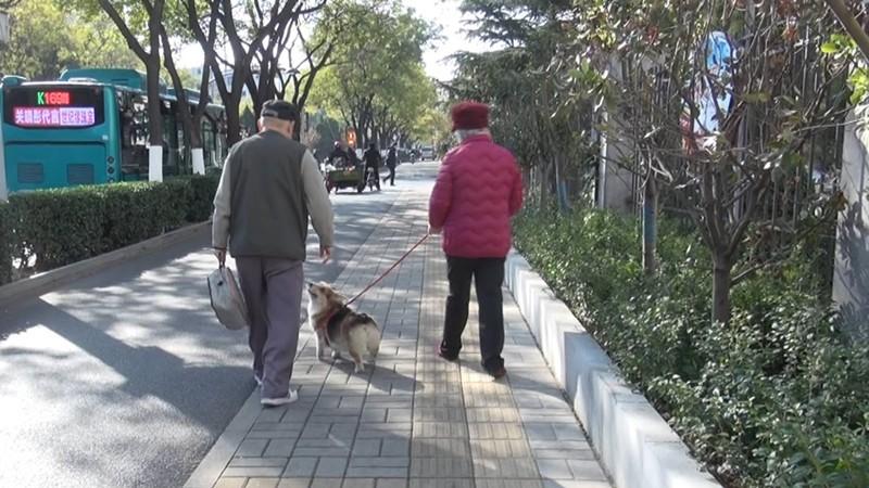 出门遛狗还不拴绳?看模范人士如何文明养狗