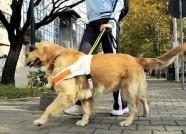 泰安出台文明行为促进条例 携犬只出门牵引绳超过1.5米要罚款