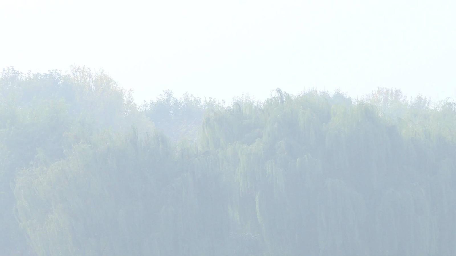 海丽气象吧∣山东发布大雾黄色预警 11个市有浓雾