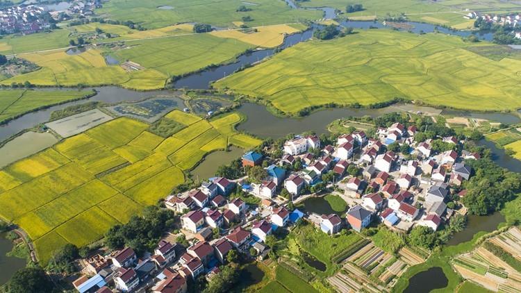 山东出台乡村产业振兴行动计划  2030年半数以上乡村基本实现农业现代化