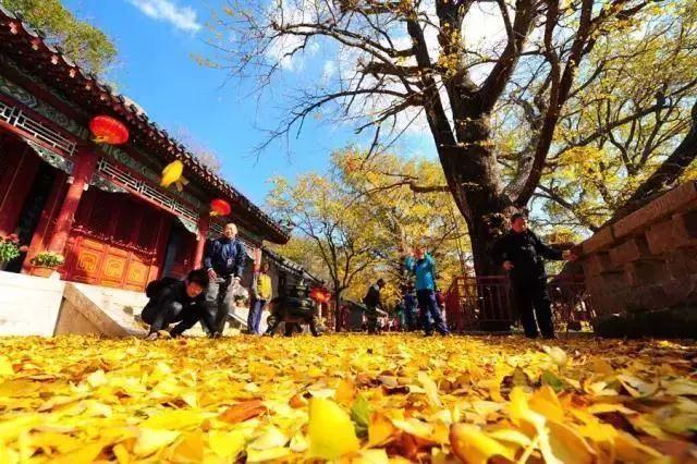 2019青岛旅游惠民月61家加入惠民联盟的景区接待游客381万人次