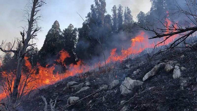守林防火19年 穿梭在火场里的林业人韩克圣:和每棵树都有感情