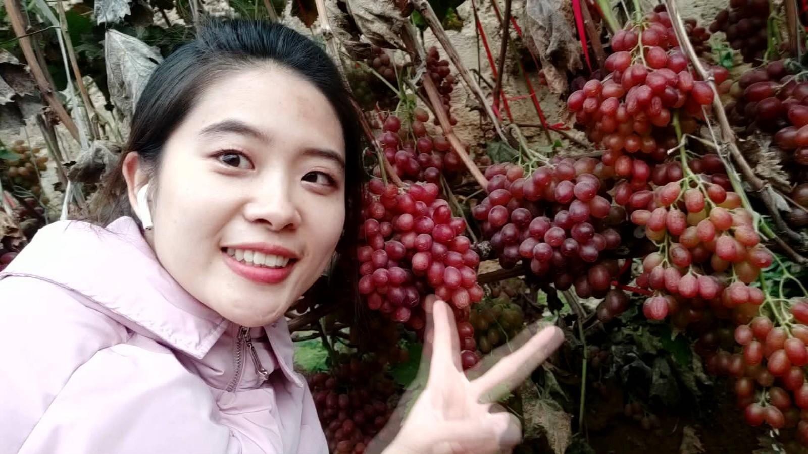 任嗨玩 | 冬天摘葡萄,原来这么开心?