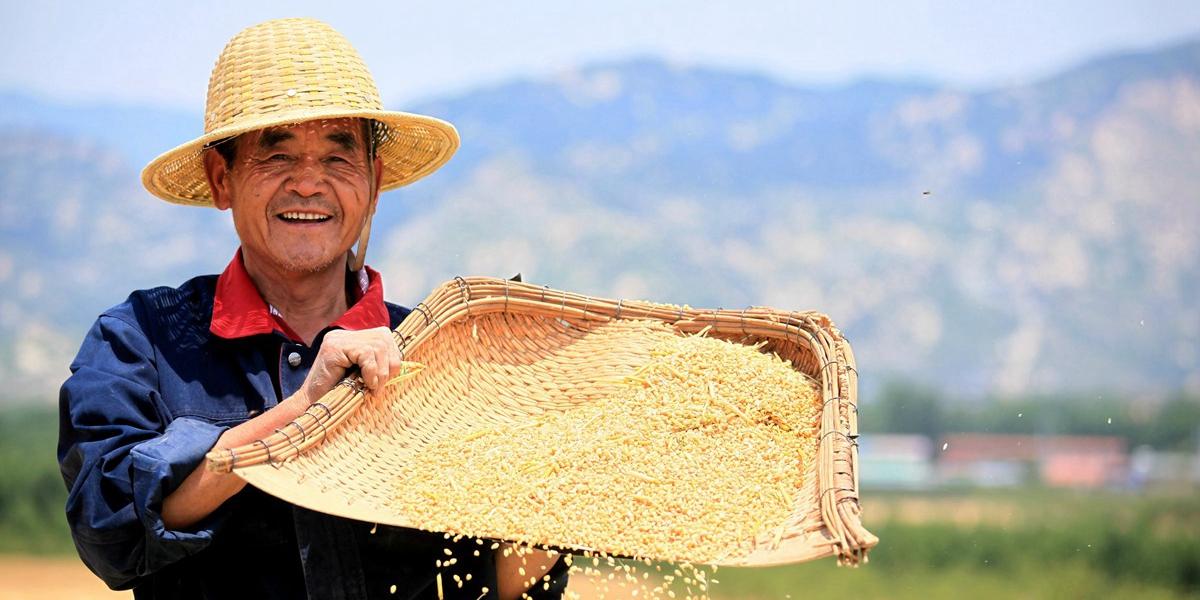 又是一年麦收时!临沂小麦开镰收割