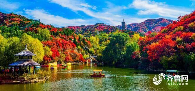 叶子红了!济南最美红叶观赏指南送达