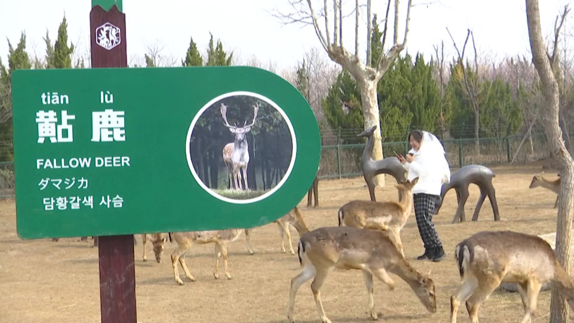 美女与萌兽 济南野生动物世界纱漫女神节上线