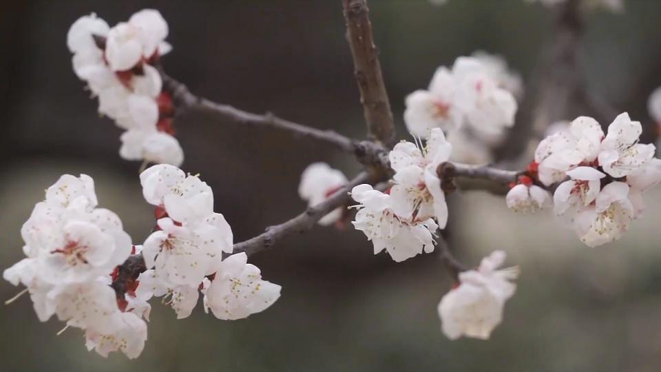 春意盎然到濟寧 踏春賞花樂享春光