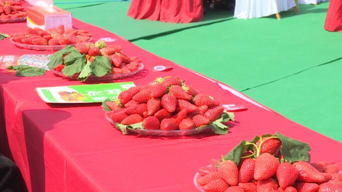 29秒|以莓会友!兰陵县举办第二届草莓文化节
