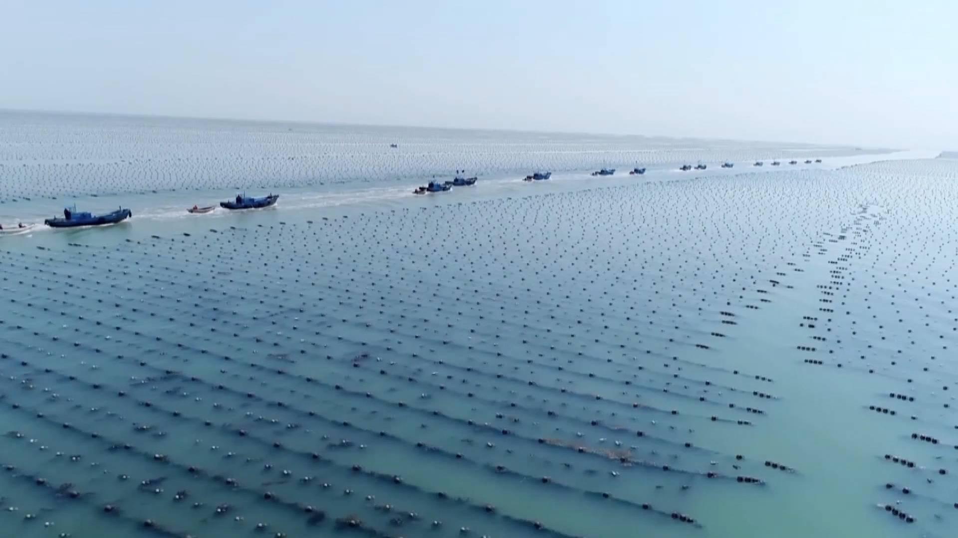 【问政追踪】威海:废水直排大海养殖场已停产整改 将对全市养殖场进行大排查