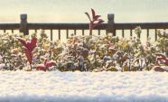 """68秒   威海今冬第一场雪真的来了!雪姑娘更""""偏爱""""南海新区和乳山"""