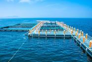 第二批省级海洋牧场示范项目名单公示,威海5家入选