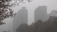 海丽气象吧丨大雾持续发威!潍坊局部地区能见度仍小于50米