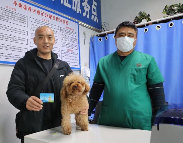 山东首个对犬只进行登记管理的县 济南平阴累计为63只狗进行登记办证