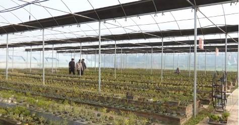 直通部委 | 全国农民合作社质量提升整县推进试点名单公布,山东7地入选