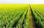 威海荣成2018年度农业科技示范主体和示范基地物化补贴发放到位