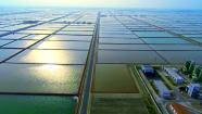 """74秒丨""""盐袋子""""闻名全国、盐产品走向世界  潍坊海盐产业""""向海而兴"""""""