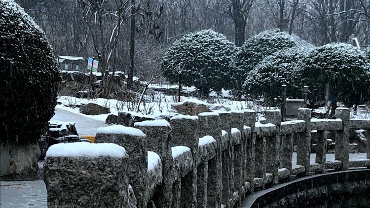 组图丨济南2020年初雪如约而至 去泉城公园听雪落的声音