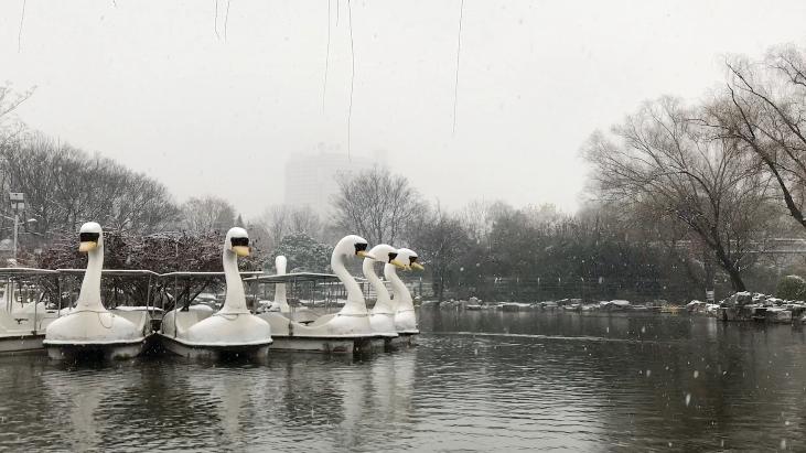 雪小花的Vlog丨全山东都在瞒着济南下雪?不存在的!初雪安排上喽