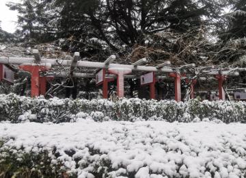 还没看够2020威海第一场雪?组图带你领略她的身姿