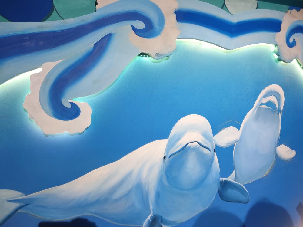 任嗨玩|看企鹅、喂海豹、观白鲸……打卡欧乐堡海洋极地世界