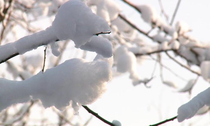 89秒视频走进雪后的龙口 银装素裹宛若童话之境