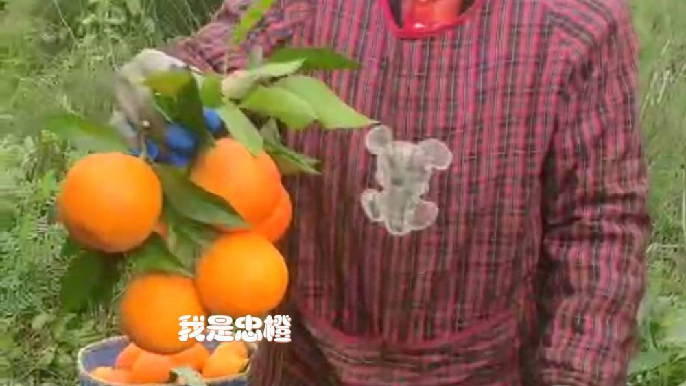 """25吨橙子不远千里上演""""橙在囧途"""",幸好遇见他们…"""
