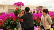 85秒丨起步价格高、节前卖得火 潍坊花卉市场火了