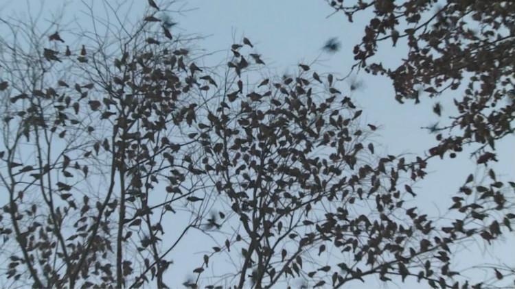 49秒│壮观!潍坊临朐县老龙湾风景区再现万鸟出林奇观