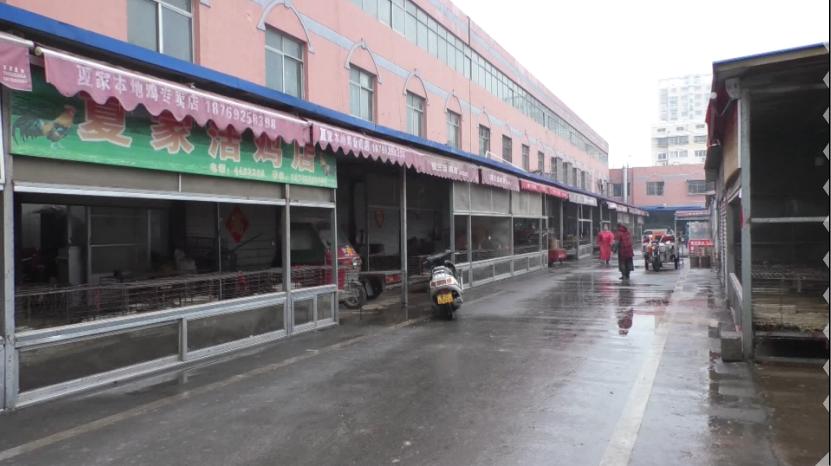 45秒|枣庄市关闭活禽交易区19个 活禽宰杀点103个