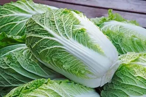济南今起投放政府储备大白菜 最先投放华联超市每斤1.45元