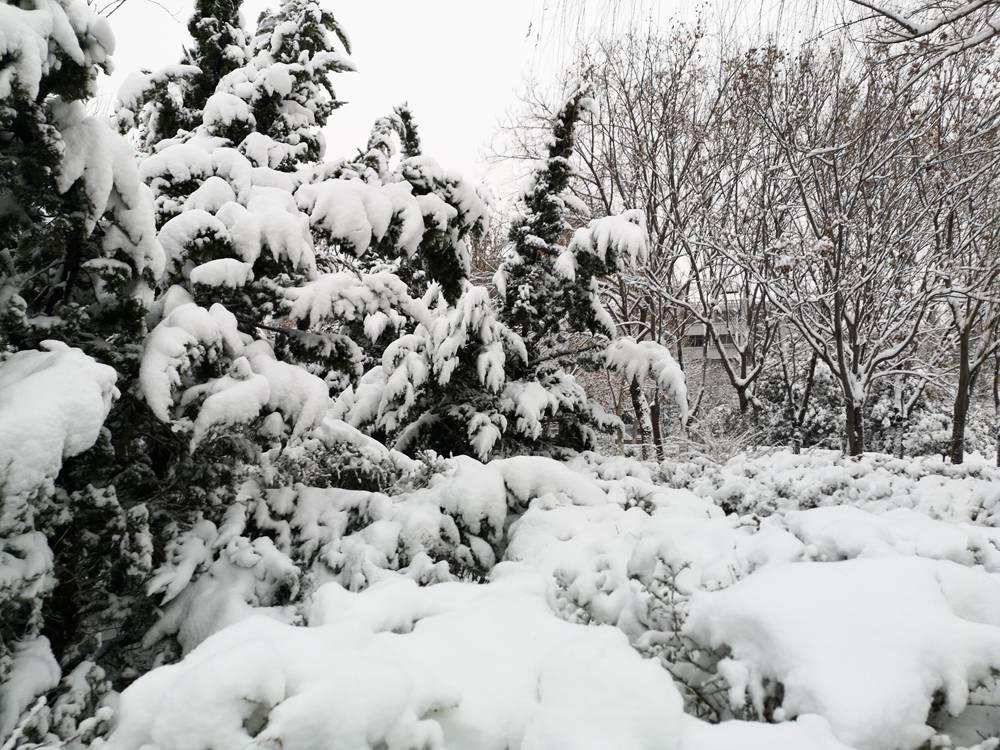 高清组图丨居家赏景!山东鼠年第二场雪如期而至