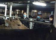 1924头澳大利亚进口肉牛在潍坊口岸实现快速通关