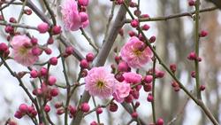64秒丨春天来了!聊城冠县清泉河畔花草芬芳生机盎然
