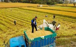 临沂安排专项资金支持涉农复产工作 已累计授信131亿元