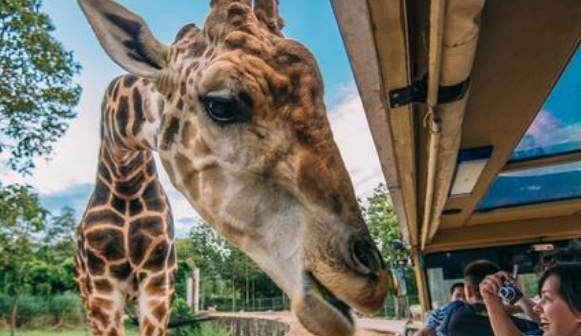 好消息!济南野生动物世界3月20日开园 景区室内项目暂缓开放