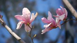 春分至!聊城:百花争明媚 莫负好春光