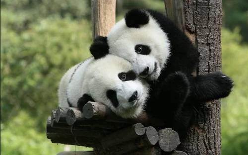 济南动物园3月21日恢复开放 年底前全国医务工作者可免费游园