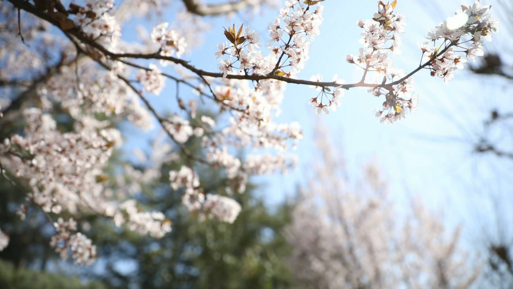 铺一地春景 展十里春风!去山东现代学院邂逅明媚春色