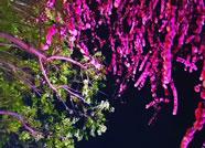 59秒丨邂逅夜色德州 陶醉于这满园春色中