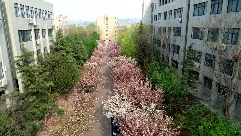 酝酿灿烂春景 山东管理学院静待学子归期