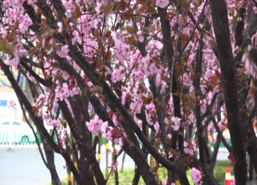 """57秒丨阵风8级、西南山区最低温跌至""""冰点""""!寒潮天气登陆潍坊"""