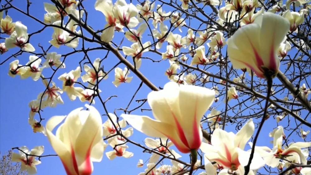万紫千红总是春!山东第一医科大学满园芬芳