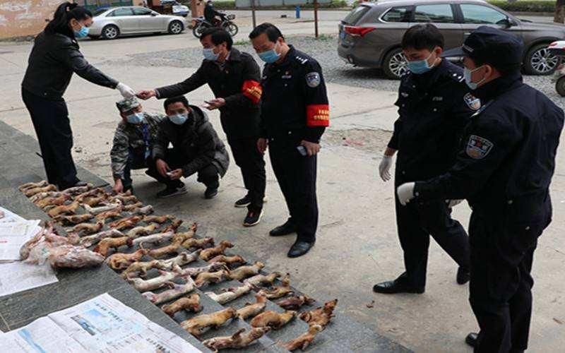 贯彻落实野生动物禁食《决定》,山东省人大将适时组织执法检查