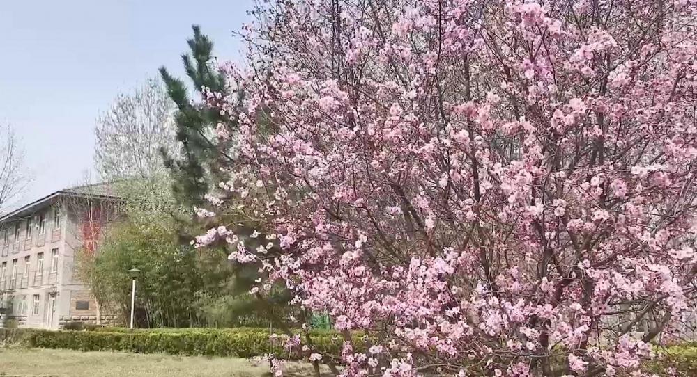 静赏山东科技职业学院的春